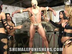 Shemale Mistresses Aline, Jo, Kawanna, and Mylena have
